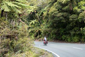 Fahrt durch den Waipoua Forest, Neuseeland Nordinsel