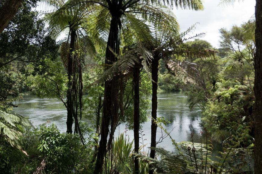 Waikato River, Neuseeland Nordinsel