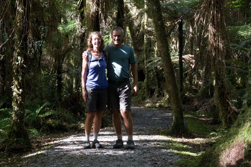 Im Regenwald an der Westküste, Neuseeland Südinsel